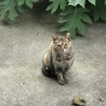 野良猫キンちゃんに癒される(1121)