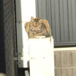 野良猫キンちゃんのシアワセ(1216)