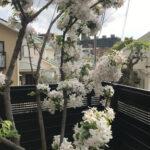のどかな春の休日(1288)
