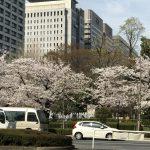 桜🌸🌸サクラ🌸🌸さくら🌸の中の古書店めぐり   867
