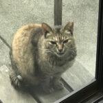 雨の休日野良猫を眺める(1345)